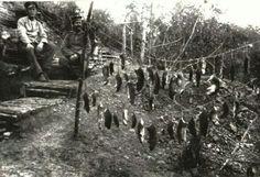 Vida en las trincheras. Cazando ratas para poder subsistir. Primera guerra mundial. 1915.
