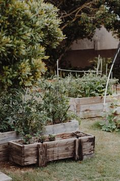 Building a Climate Victory Garden to Regenerate Soil   Modern Frontierswoman Garden Beds, Garden Plants, Indoor Plants, Garden Images, Garden Pictures, Horticulture, Planter Boxes, Planters, Victory Garden