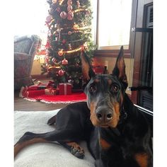Fishermans cove conservation area allows you to bring your dog on christmas doberman solutioingenieria Gallery