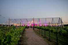 The Vineyards - Sophie's Wedding - May 2014