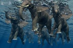 Swimming Elephants - even if they swim fast, you can't call it a stampede.
