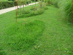 jardin-ens-lsh-gilles-clement.1190444319.JPG