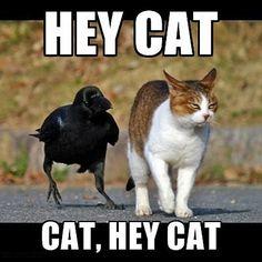 Hey cat