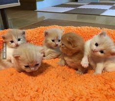 A bunch of cute kittens to cheer up your day!  #9gag @9gagmobile