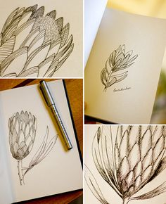 Botanical sketches by birds trees Botanical Line Drawing, Botanical Drawings, Botanical Art, Botanical Illustration, Drawing Sketches, My Drawings, Drawing Ideas, Protea Art, Art Sketchbook