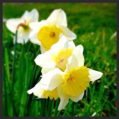 Fleur, Kehl