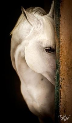 This cannot be an actual, living horse.  It must be a spirit horse, a horse of legend, the horse all other horses aspire to be.  But, no, it is a horse in a barn in Oregon.  The photographer's artistic eye inspired all that reverie.