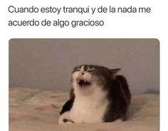 Funny Spanish Memes, Spanish Humor, Funny V, Funny Memes, Meme Meme, Bff Images, Bizarre, Cartoon Network Adventure Time, Comedy Central
