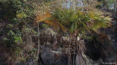 Dünyanın en nadir bulunan 9 bitkisi