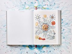 The Art and Science of Ernst Haeckel: A Compendium of Colorfully Rendered 19th-Century Biological Illustrations | Colossal
