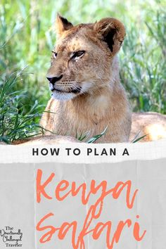 Dreaming of seeing the Great Migration? Elephants and lions in the wild? Here's what you need to know about planning a safari to Kenya! Plan A, How To Plan, The Great Migration, Wild Lion, Kenya Travel, Our Last Night, Air Balloon Rides, Baboon, Rainy Season