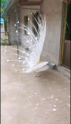 Cute Birds, Pretty Birds, Beautiful Birds, Funny Animals, Cute Animals, World Wallpaper, Bird Gif, White Peacock, Beautiful Love Pictures