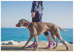 collar-para-perros-de-calidad-brottdog
