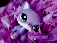 lps purple shorthair <3