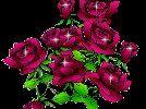 Golec uOrkiestra - Lornetka w wykonaniu kwiatuszek1968