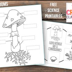 Mushroom science worksheet, parts of a mushroom, life cycle of a mushroom science journal. Free printables, worksheets, notebooking pages for homeschool. Nature Activities, Autumn Activities, Science Activities, Kindergarten Activities, Teaching Science, Teaching Ideas, Science For Kids, Science And Nature, Mushroom Crafts
