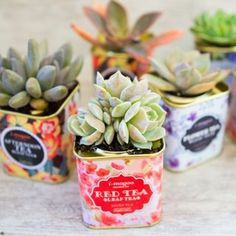 Succulents in Tea Tins | craftgawker | Bloglovin'