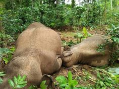 This Indian Tea Plantation Works in Harmony with the Environment and Elephants