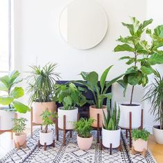 WEBSTA @ thepottedjungle - This is my kind of party! Home Decor Inspiration, Decor Ideas, Trees To Plant, Indoor Plants, Terrarium, House Plants, Garland, Planter Pots, Floral
