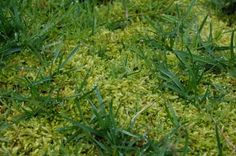 [Blog] Rasenpflege im Frühling: Tipps zum Vertikutieren, Düngen, Mähen - http://www.garten-freunde.com/rasenpflege-im-fruehjahr-die-wichtigsten-schritte/1478