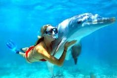 swim with dolphins.