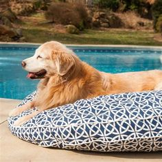 Posh Puppy Boutique is a shop for designer dog clothes and accessories -Pool and Patio Round Dog Beds puppy Beds, Blankets & Furniture - Beds, pet toys, collars, carriers, treats, stunning bowls, diaper, belly bands, id tags, harnesses, apparel