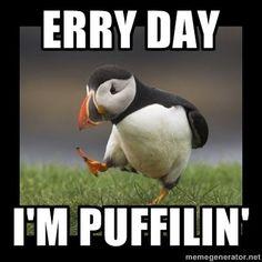 pufflin