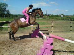 Katie Price Equestrian - Customer Gallery Equestrian, Public, Horses, Celebrities, Gallery, Animals, Celebs, Animales, Roof Rack