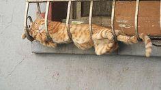 猫のきれいな画像を貼るよー(続き3):ハムスター速報