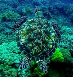 Gorgeous sea turtle, we need to protect the ocean life, so amazingly beautiful!♡♡♡ Gorgeous sea turtle, we need to protect the ocean life, so amazingly beautiful! Beautiful Creatures, Animals Beautiful, Beautiful Ocean, Beautiful Gorgeous, Absolutely Stunning, Animals And Pets, Cute Animals, Wild Animals, Baby Animals