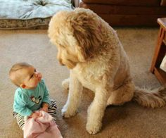 Baby and big dog