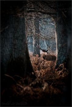 autumnal deer forest brown