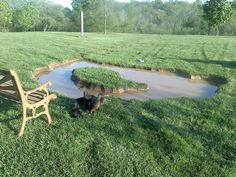 Backyard duck pond created in a weekend.  Could be finished with a liner and plants.  Great idea for our family of ducks!