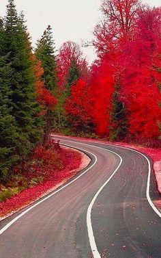 Gorgeous Pathway