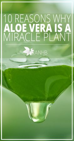 10 Reasons Why Aloe Vera is a Miracle Plant - All Natural Home and Beauty