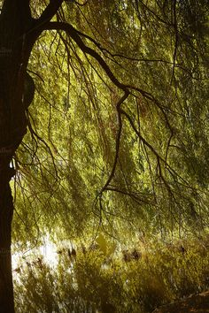 Backlit Tree Branches and Lake by MarMa on @creativemarket