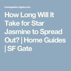 How Long Will It Take for Star Jasmine to Spread Out? | Home Guides | SF Gate