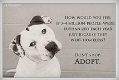 Adopt don't shop!