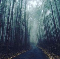 Moment silent hill - Andradas/SP Brazil