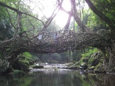 #roots, #bridge, #adventure