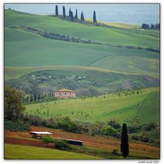 Shades of green - Tuscan spring  | by © Noelle Smith