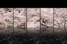 桜:SAKURA | 日本 > 関東地方の写真 | GANREF Beautiful World, Beautiful Places, Beautiful Scenery, View Photos, Great Photos, Cherry Blossom Japan, Cherry Blossoms, Zen, Japanese Landscape