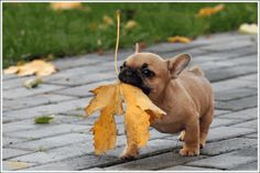 HOW CUTE!!!! Even this cute little puppy is ready for Fall.