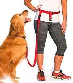 Freedom to jog, run, bike, hike or just walk with your dog without holding a leash! Get yourself a hands free dog leash today. They are as convenient as they are comfortable.
