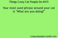 haha i ask my cat that all the time.