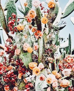 cactus with flowers Easter, desert-swag Cactus Flower, Cactus Plants, Cacti, Cactus Art, Wild Flowers, Beautiful Flowers, Beautiful Beautiful, Plants Are Friends, Mother Nature