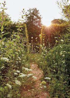 A Landscape Designer's Wild Garden - The New York Times garden inspiration Contemporary Landscape, Landscape Design, Garden Design, Hornbeam Hedge, Mock Orange, Garden Cottage, Meadow Garden, All Nature, Day Lilies