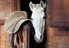 Le box - Un cheval qui sort la tête de son box