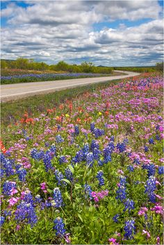 Texas Bluebonnets and Wildflowers, USA