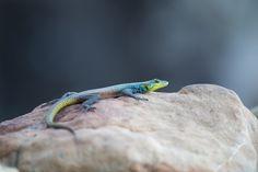 Photograph by Ross Couper Wildlife Safari, Photograph, House, Photography, Home, Photographs, Homes, Houses, Fotografia